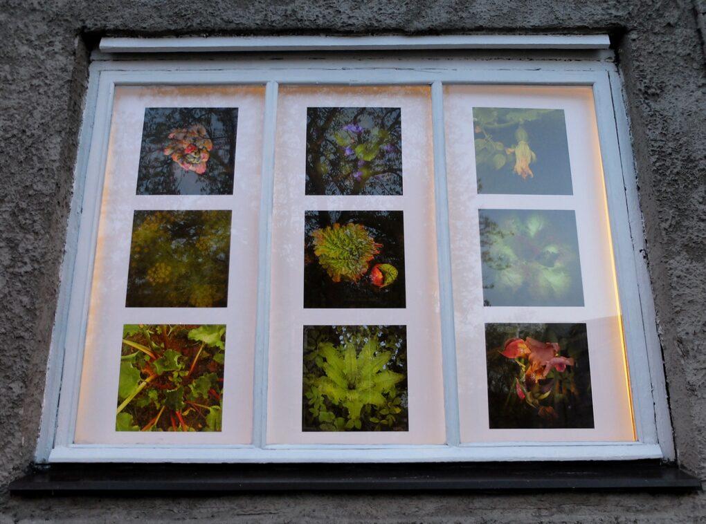 """Jaak Kikas """"Üksilduse aed / Hortus solitudinis"""". Näitus galerii Positiivi akendel 6.-31.05.2020"""