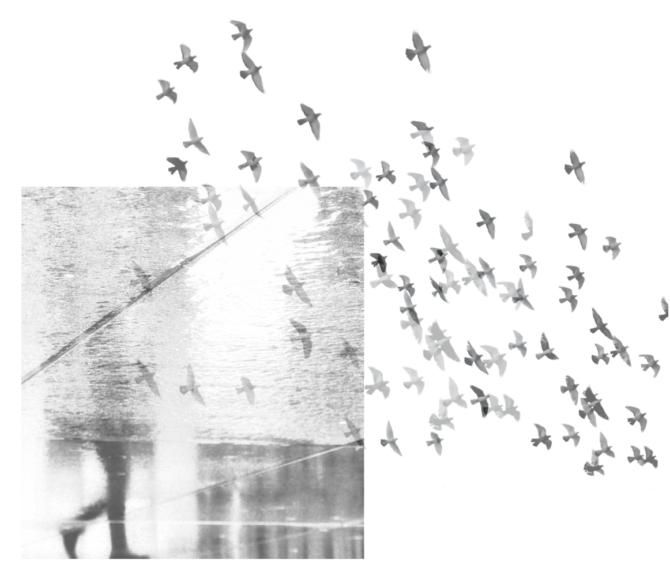 """Loovgraaf ja galerii Positiiv kutsuvad osalema fotonäitusel """"Emotsioon"""""""